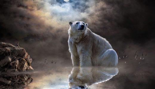 韓国人は『熊』ではなく『虎』かもしれなかった?紀元前2370年にあった『はず』のお話
