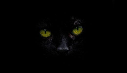 真っ暗な部屋で黒い布で目をふさぎ、『存在しない黒猫』を捕まえることはできるか?